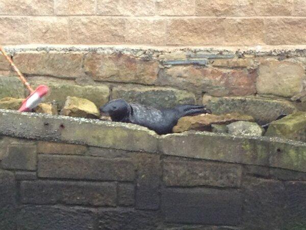 Seal at North Shields