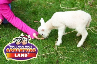 Lamb At Mini and Maxi Moos Adventure Land Farm DH7 6EY